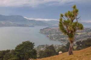Přeháňky na poloostrovem Otago